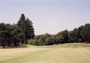 袖ヶ浦カンツリークラブ・袖ヶ浦コース 16番ホール・パー5 左の高い杉3本がいわゆる御神木。フェアウェイはそこから直角に左ドッグレッグしている。